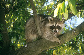 WLD 01 RK0028 02