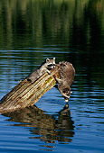 WLD 01 TK0004 01
