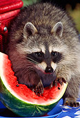 WLD 01 TK0005 02