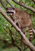WLD 01 TL0003 01