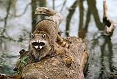 WLD 01 TL0004 01