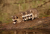 WLD 01 TL0005 01