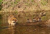WLD 01 TL0006 01