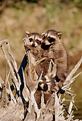 WLD 01 TL0008 01