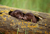 WLD 03 TL0002 01
