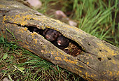 WLD 03 TL0003 01