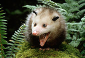 WLD 04 TK0002 01