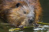 WLD 06 TK0001 01
