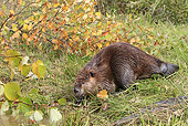 WLD 06 WF0007 01