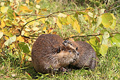 WLD 06 WF0009 01