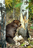 WLD 06 TL0001 01