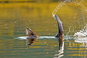 WLD 06 TL0009 01