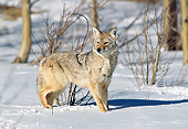 WLD 08 GL0001 01