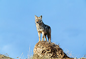 WLD 08 GL0004 01