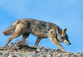 WLD 08 GL0006 01