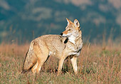 WLD 08 KH0002 01