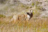 WLD 08 MC0008 01