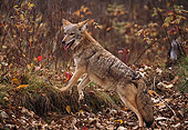 WLD 08 RK0014 02