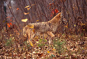 WLD 08 RK0016 02