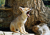 WLD 08 RW0002 01