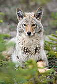 WLD 08 TK0001 01
