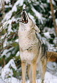 WLD 08 TL0008 01