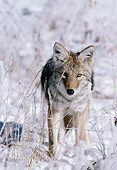 WLD 08 TL0009 01