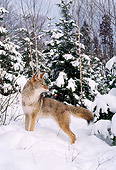 WLD 08 TL0010 01