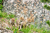 WLD 08 TL0011 01