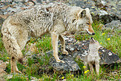 WLD 08 TL0013 01