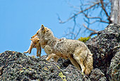 WLD 08 TL0014 01