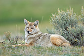 WLD 08 TL0018 01