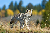 WLD 08 TL0020 01