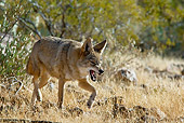 WLD 08 TL0021 01