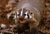 WLD 09 RK0022 01