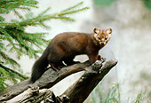 WLD 09 TL0005 01