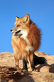 WLD 11 AC0008 01
