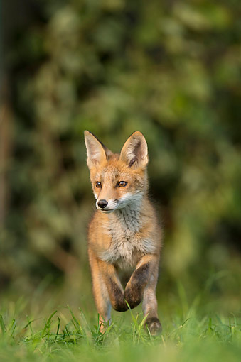 WLD 11 AC0012 01