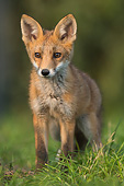 WLD 11 AC0013 01
