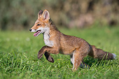 WLD 11 AC0015 01