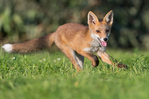 WLD 11 AC0016 01
