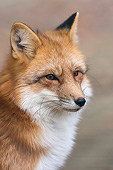 WLD 11 AC0017 01