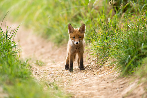 WLD 11 AC0018 01