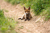 WLD 11 AC0019 01