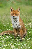 WLD 11 AC0020 01