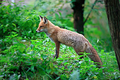 WLD 11 AC0021 01