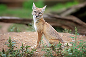 WLD 11 AC0022 01