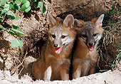 WLD 11 BA0004 01