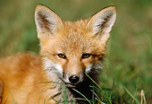 WLD 11 BA0005 01