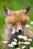 WLD 11 GL0002 01